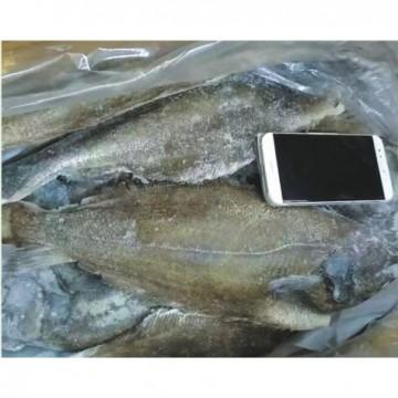 深海鲽鱼(1×30斤)