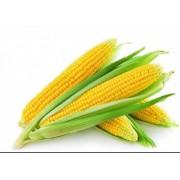 高端超甜玉米粒可榨玉米汁